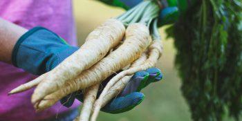 Pietruszka – niezwykłe właściwości na zwykłe dolegliwości