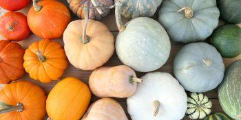 Późne zbiory z grządek – przegląd właściwości kilku warzyw dyniowatych