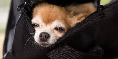Zwierzak dla seniora – czy to dobry pomysł