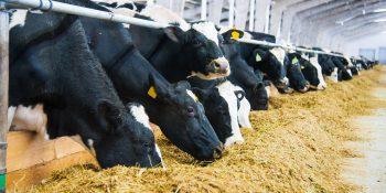 Przekazanie gospodarstwa rolnego