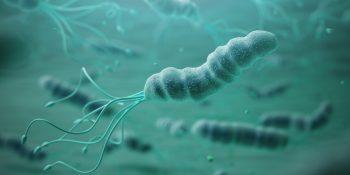 Helicobacter pylori – jak uniknąć zakażenia i jak leczyć tą bakterię