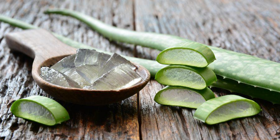 Aloes - poznaj wyjątkowe właściwości tej rośliny